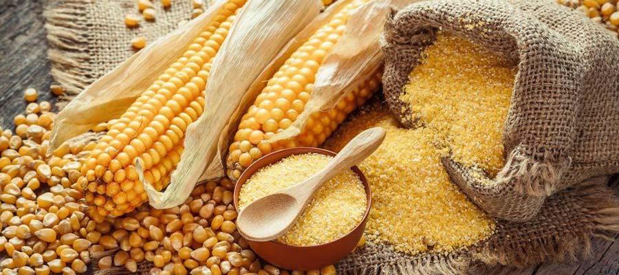 Harina de maíz precocida